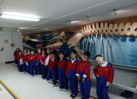 VISITAMOS EL MUSEO DEL MAR